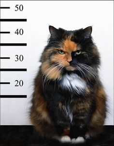 cat mug shot
