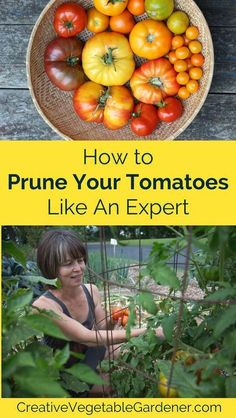 Prune Your Tomato Plants Like an Expert Get those crazy tomato plants under control with some simple pruning.Get those crazy tomato plants under control with some simple pruning. Growing Tomatoes From Seed, Growing Tomatoes In Containers, Grow Tomatoes, Cherry Tomatoes, Baby Tomatoes, Dried Tomatoes, Fall Vegetables, Organic Vegetables, Veggies