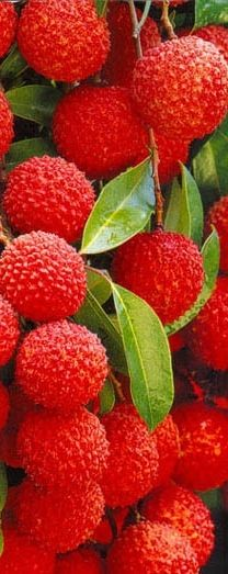 #red lychees from asia
