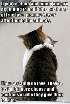 Funny Cats, Funny Animals, Cute Animals, Animal Funnies, Cat Quotes, Animal Quotes, Animal Pics, Crazy Cat Lady, Crazy Cats