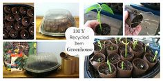 The Comfy Crafter: DIY Greenhouse from Recycled Items Got to give this a try.