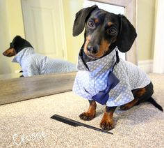 DOXIE CRUSOE getting dressed for Valentine's date