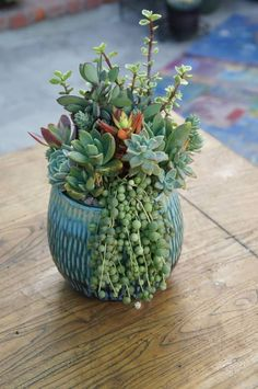 .simple container but artful collection and arrangement of simperviran