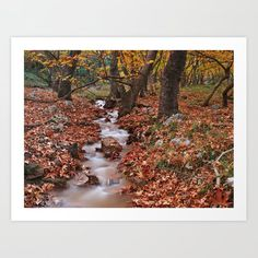Creek in sycamore tree forest Art Print by kostaspavlis Forest Art, Tree Forest, Framed Prints, Canvas Prints, Art Prints, Fall Photos, Book Crafts, Water, Artwork