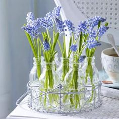 for spring - grape hyacinth in bottles- I like this for a bathroom!!!
