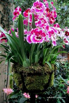 Orchids grow well in moss & wire baskets. https://www.houseplant411.com/houseplant/orchids-how-to-grow-care