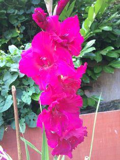 Garden, Flowers, Plants, Pictures, Photos, Garten, Lawn And Garden, Gardens, Plant