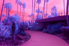 Palm Springs, In Infrared | Amuse