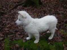 berger blanc suisse dog photo | Berger-Blanc-Suisse-Dog5.jpg 01-May-2012 10:42 40k