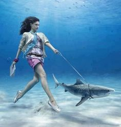 """Well....time to take the shark for a walk!!!"""