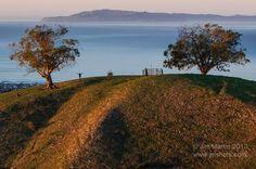 Jim Martin ~ 2 trees ~ Ventura