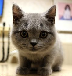 Who can resist the cute little bundle of fur! We're happy to welcome Kitty to our practice! What a sweet, calm, soft bundle of joy! IVS is like working in the Disney of animals! Exam Day, Veterinary Care, Pet Health, Your Pet, Calm, Kitty, Joy, Pets, Disney