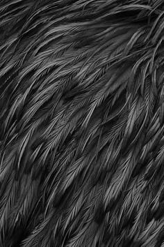 Feathers | Texture