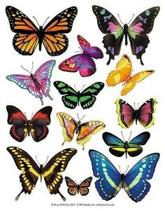 Enlarged view of a sheet of butterfly accent stickers from IdeaStix. Great selection, and I can imagine some fun uses for this. Butterfly Drawing, Butterfly Painting, Butterfly Wallpaper, Butterfly Wings, Butterfly Artwork, Butterfly Pictures, Butterfly Decorations, Vintage Butterfly, Beautiful Butterflies