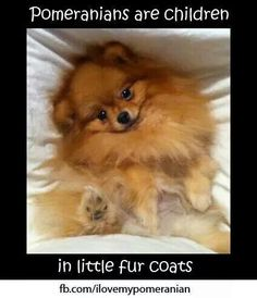 Fur baby! I miss you Cinnamon <3