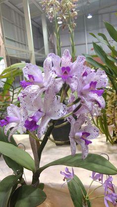 Foto: Lupa (Exposição de Orquídeas / Sesi Sorocaba)