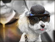 more white dog love...