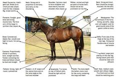 What you should look for for in a race horse...actually, ANY horse.  This applies to barrel horses, too.