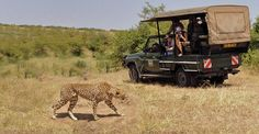 Safari holidays are an amazing travel experience. Come and enjoy #KenyaSafariHolidays. Know more @ https://goo.gl/ZWH9xZ