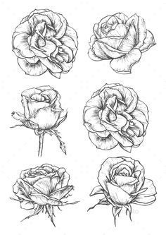 Buy Blooming Rose Flowers And Buds Sketches by VectorTradition on GraphicRiver. Blooming rose sketches of luxurious flower and tight bud with thorny stem and carved leaf. Greeting card, t-shirt pri. Plant Sketches, Flower Sketches, Drawing Sketches, Art Drawings, Rose Drawings, Drawing Art, Drawing Style, Nature Drawing, Sketching