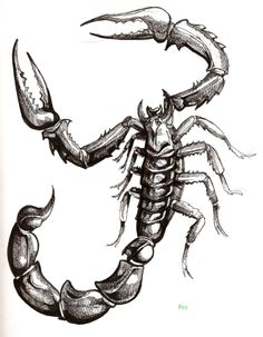 Free Tattoo Designs | Best Scorpion Tattoo Body Tattoo Blog About Art - Free Download Tattoo ...