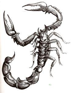 Tribal Scorpion Tattoo Designs   Scorpion Tattoo Images 81 Piercingmapcom View Original Image