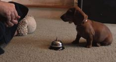 Ringing a bell for treats - Imgur