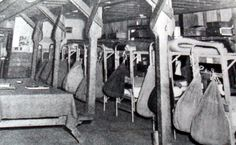 Axis POWs poured into the US - 163,000 by Sept 1943. They were housed in military-style camps all over the country. The barracks were spare but comfortable.