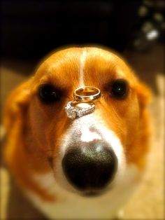 Dexter Beersox Cox was featured on our wedding invitations. He has the patience of a saint.      submitted by Samantha Pack
