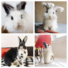 5 Instagram Celebri-Bunnies to Follow Before Easter Sunday