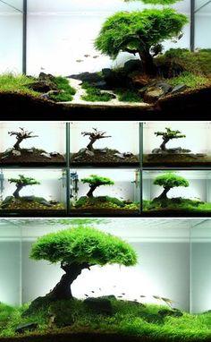 photos d'aquarium ayant des compositions botaniques impressionnantes
