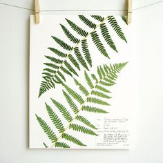 botanical-plant-prints-day-three-creations-2