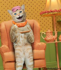 Funny Cat Photo of Maude With A Cup Of Tea. I don't remember inviting you to my tea party! Scary Animals, Funny Animals, Cute Animals, Funny Cat Photos, Funny Animal Pictures, Funny Grumpy Cat Memes, Funny Cats, Angry Cat, Beautiful Cats