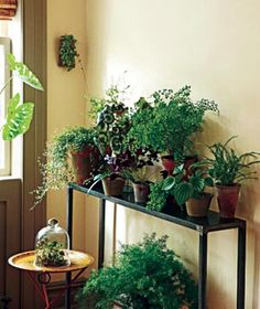 Indoor Plant Decorating Ideas Plants Potted Gardening