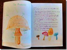 5th grader 3 fungi