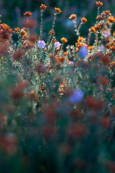 autumn wildflowers | flowers + nature photography