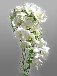 Phaelenopsis Loveliness