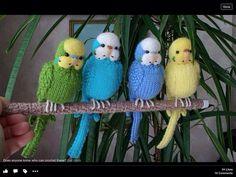 Zahmetsiz kuşlar