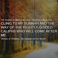 Cling to the sunnah