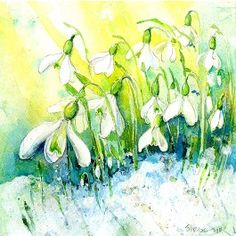 Snowdrops Greetings Card By Sheila Gill. | Greetings Cards | Prints | Gift Wrap