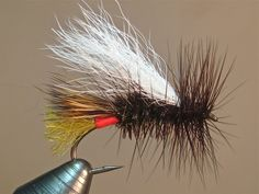 LaFontaine Royal Double Wing (variation)  SBS - posted in Step by Step Patterns & Tutorials:   A few minor changes to the original.  hook - Dai Riki 280 #10 thread - Danville 6/0 brown tail - EP Fibers light olive tag - Uni-stretch Chinese red rear wing - elk hair rib - x-small wire gold body - peacock herl body hackle - coachman brown wing - calf tail white front hackle - coachman brown  mash barb, start thread at hook point; tie i...