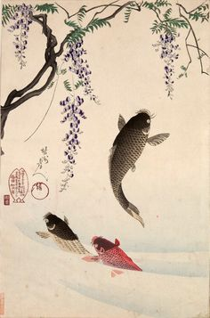 beifongkendo: Carp jumping beneath the wisteria, woodblock print by Toyohara Chikanobu, 1896.