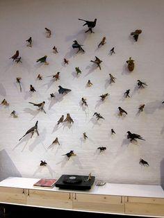 taxidermy birds found in South America