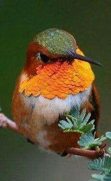 Hummingbird.