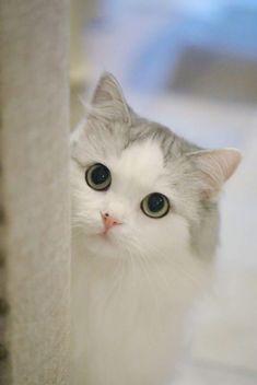 my name is cutieeee. Cute Cat Memes, Funny Cute Cats, Cute Funny Animals, Cute Baby Animals, Cute Baby Cats, Cute Little Kittens, Kittens Cutest, Cute Dogs, Pretty Cats