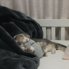 Cozy Napping