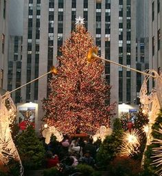 Thanksgiving is just days away, and not too long after, Manhattan's Rockefeller Center's Christmas Tree will be lit up for the holiday season! To get the scoop on this beloved NYC tradition, and find out when you can tune in to watch the ceremony, click here!