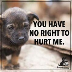 Please Call your local police, animal control or humane society. Please be their voice. Please help me save the Animals Dog Quotes, Animal Quotes, Save Animals Quotes, Report Animal Abuse, Stop Animal Cruelty, Animal Control, Animal Rights, Dogs And Puppies, Chihuahua Dogs