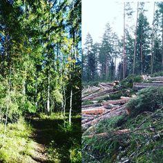 Blogissa ajatuksia ja tunteita jotka heräsivät kun meidän lähimetsästä tuli hakkuualue  My favorite place nearby has been destroyed... #uusipostausblogissa #linkkiprofiilisssa @kodinkuvalehti #moreontheblog #linkinbio #metsässä #lenkillä #metsä #hakkuualue #metsätyöt #goodbye #intheforest #forestwork #destruction #sad #nature #green  #summer #spring #tree #trees #photooftheday #mothernature #crying