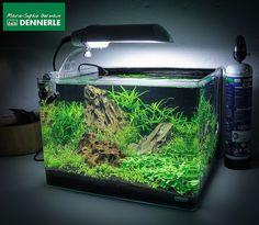 """""""Falsteristic"""", a 35 L Dennerle Scaper's Tank - by Marie-Sophie Germain  - www.mariesophiegermain.net"""